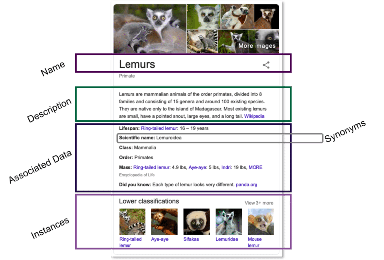 An example knowledge panel for the veterinarian ontology